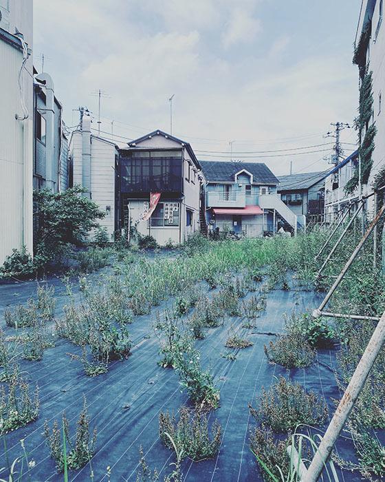 世田谷区豪徳寺 / iPhone 11_c0334533_17044761.jpg
