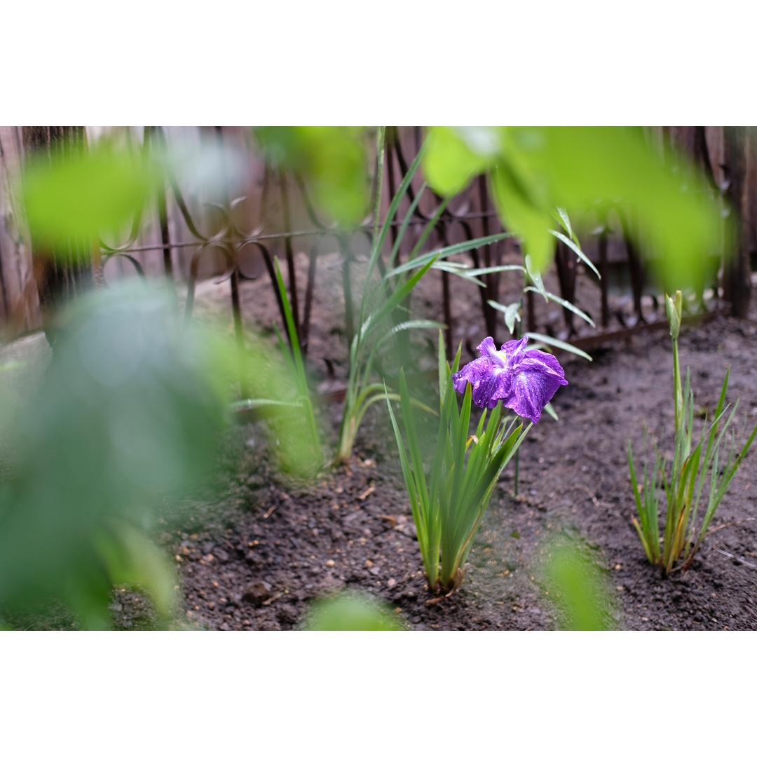 わが家の庭づくり。3日目のようす。_d0227246_10450838.jpg