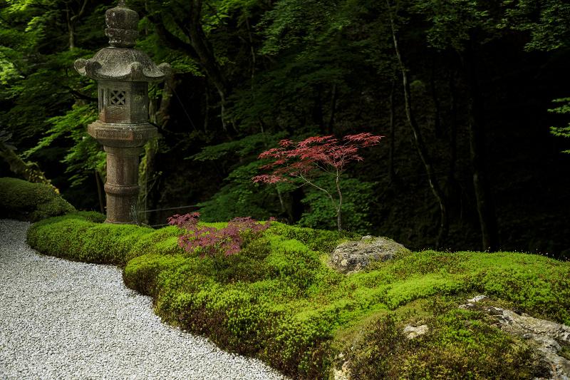 新緑と山野草(古知谷阿弥陀寺)_f0155048_19521785.jpg