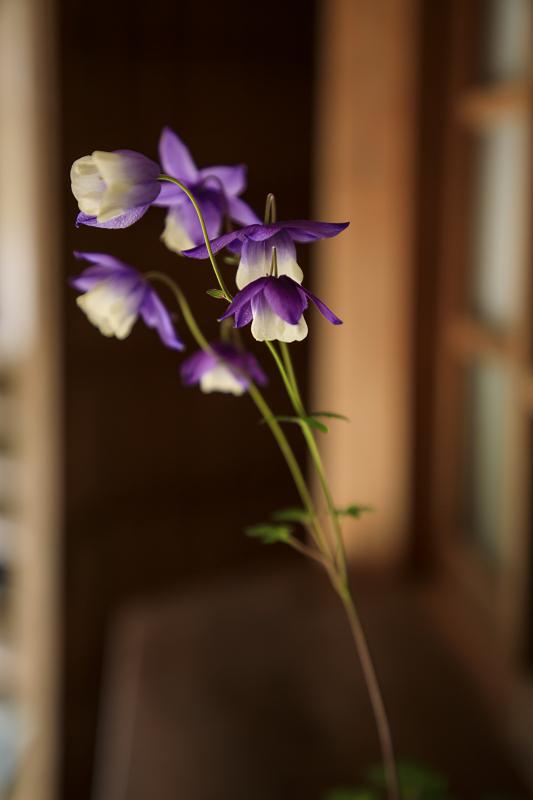 新緑と山野草(古知谷阿弥陀寺)_f0155048_19523964.jpg