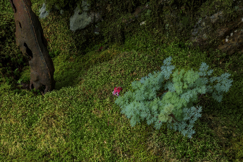 新緑と山野草(古知谷阿弥陀寺)_f0155048_1954888.jpg