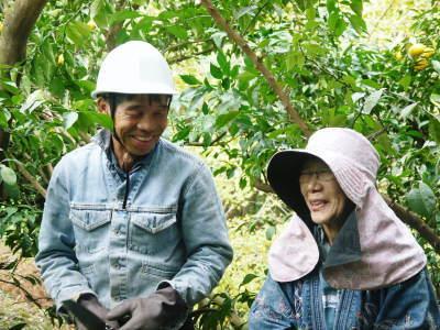 香り高き柚子(ゆず) 着果の様子を現地取材(2020) 今年もまずは青柚子を9月中旬からの出荷予定です!_a0254656_19003877.jpg