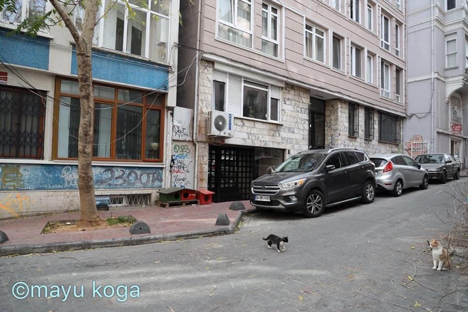 猫出入り自由なカフェ☕_e0255060_01481868.jpg