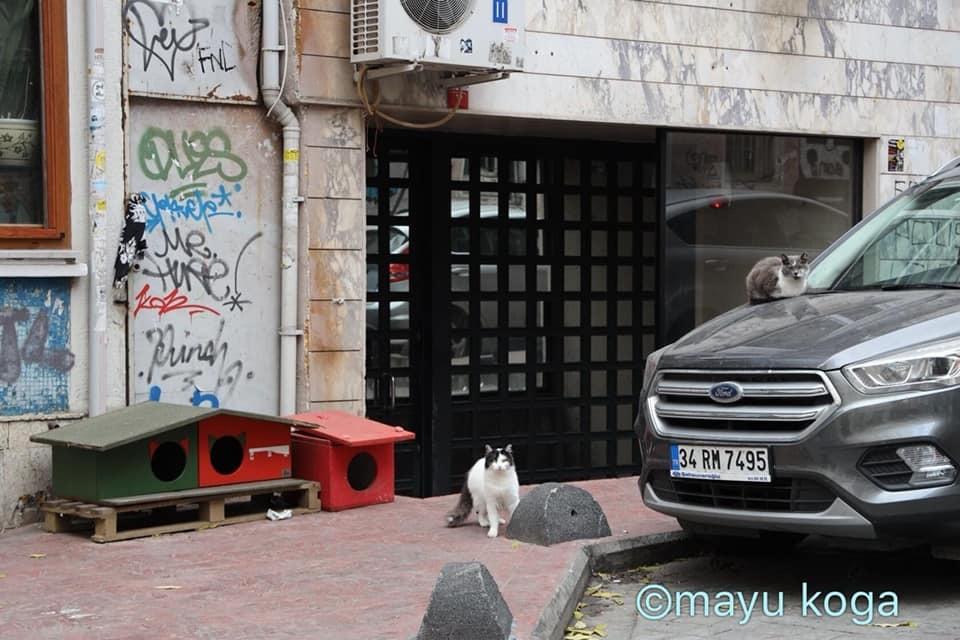 猫出入り自由なカフェ☕_e0255060_01530804.jpg