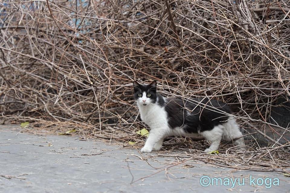 猫出入り自由なカフェ☕_e0255060_01554981.jpg