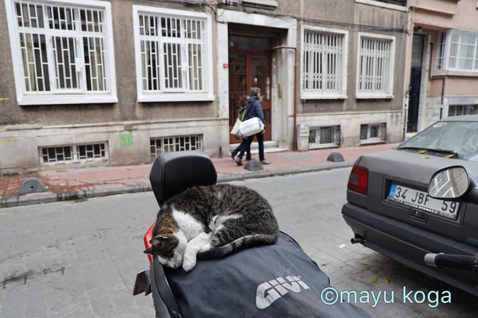 猫出入り自由なカフェ☕_e0255060_01572555.jpg