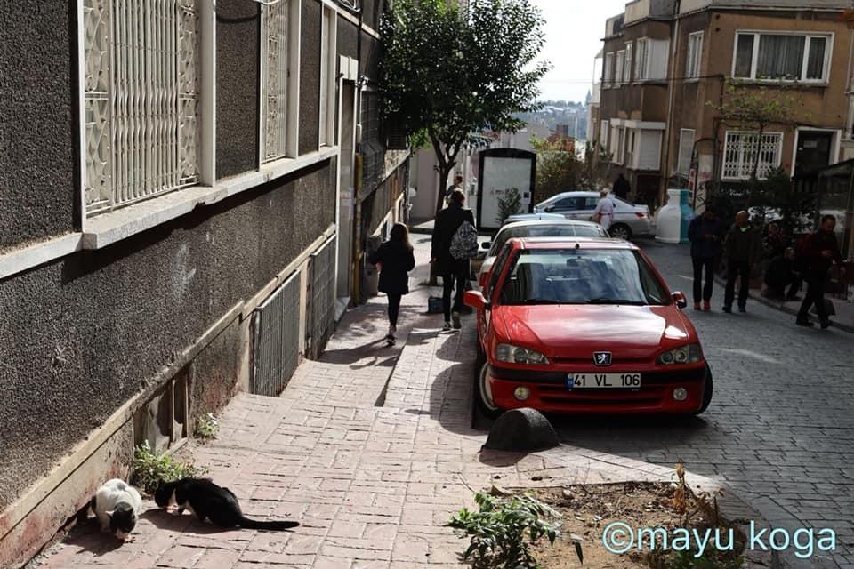 猫出入り自由なカフェ☕_e0255060_01591474.jpg