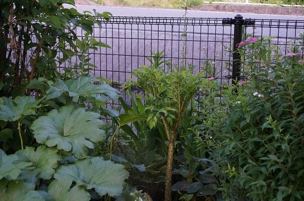 こんにゃくをお庭に_e0365880_22351170.jpg