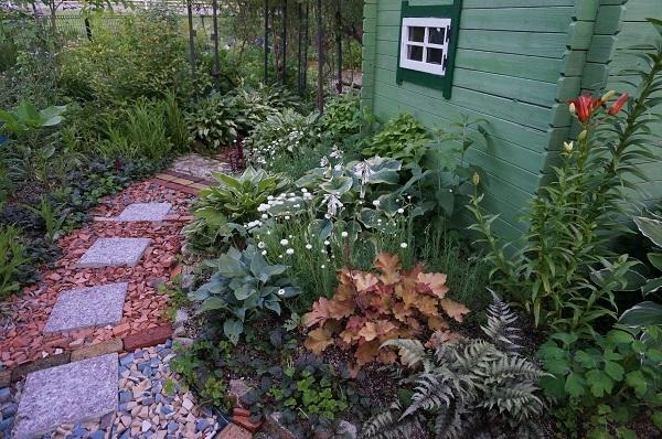 こんにゃくをお庭に_e0365880_22364758.jpg