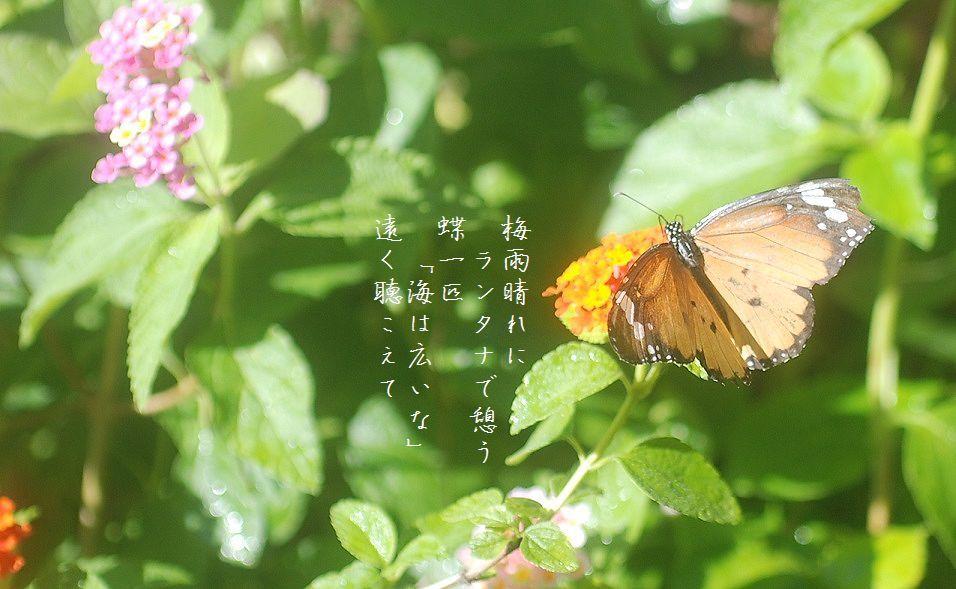 水無月の庭にて_c0187781_17323363.jpg