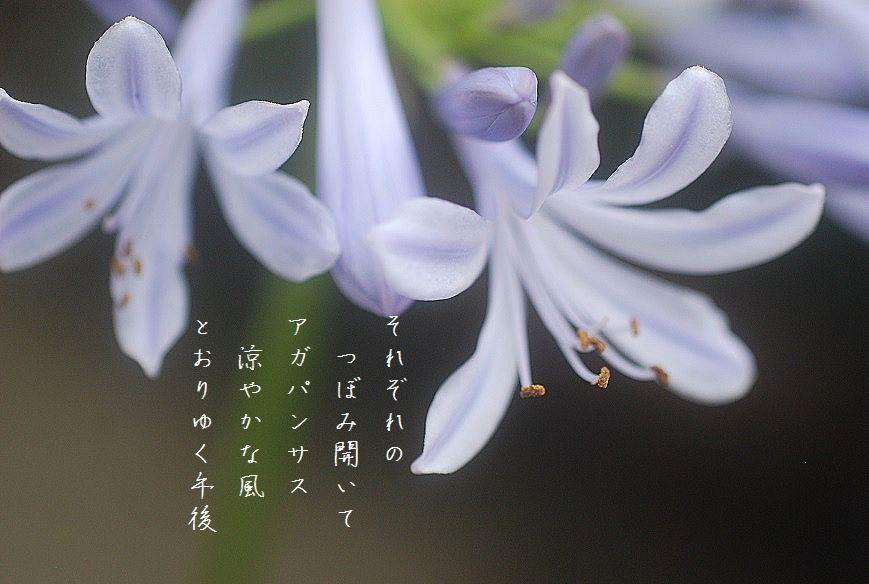水無月の庭にて_c0187781_17412285.jpg