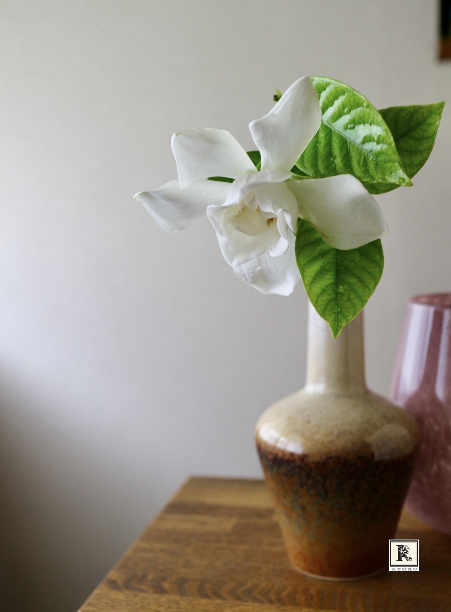 今朝咲いたクチナシの花です_c0128489_21250669.jpeg