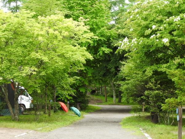 浅間山の動向(2020年6月24日)_b0174425_09005721.jpg