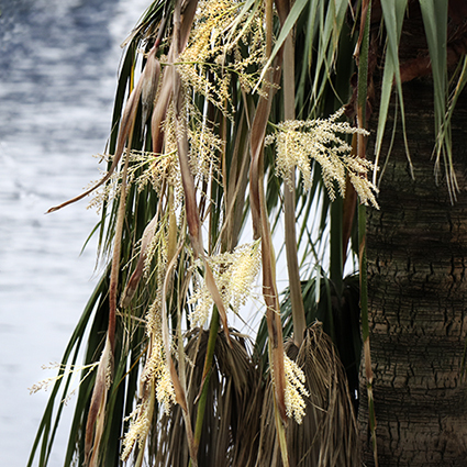 椰子の花らしい……です。_f0165332_17473877.jpg