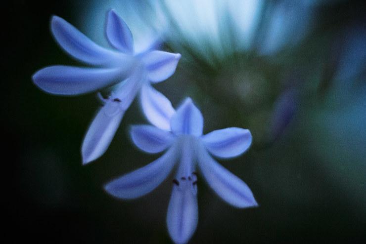 flower(3cut)_e0342136_20450320.jpg