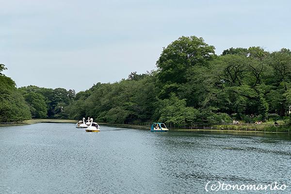 白鳥のボートと博多イベントへのおいしい妄想♪_c0024345_11311349.jpg