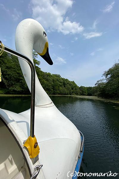 白鳥のボートと博多イベントへのおいしい妄想♪_c0024345_11311375.jpg