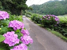 【伊豆高原 池の里山】_e0093046_13461235.jpg