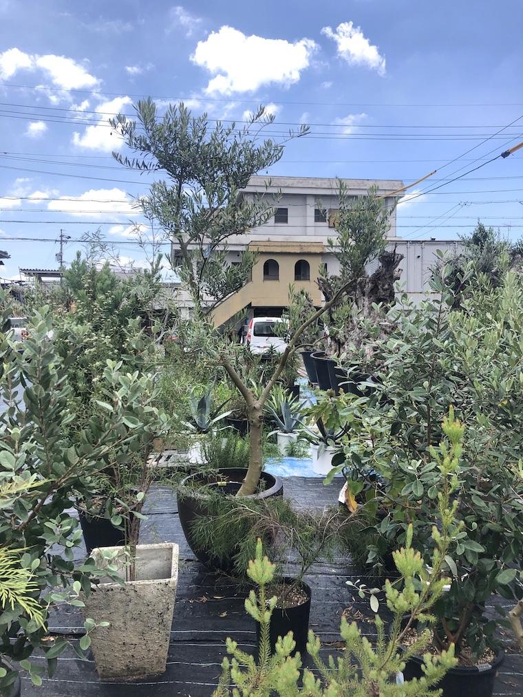 Tidy houseのお庭。_f0324766_17540178.jpg