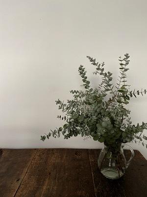 ベランダ庭の植物たち_b0241386_09283115.jpg