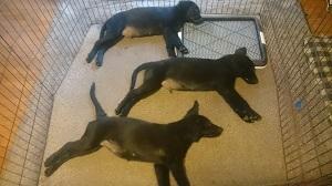 犬は大らかに育てよう!2の①_b0084194_18513208.jpg