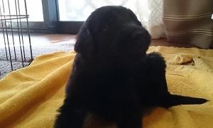 犬は大らかに育てよう!2の①_b0084194_18520298.jpg