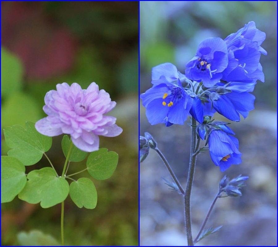 花・いろいろ_d0162994_08211939.jpg