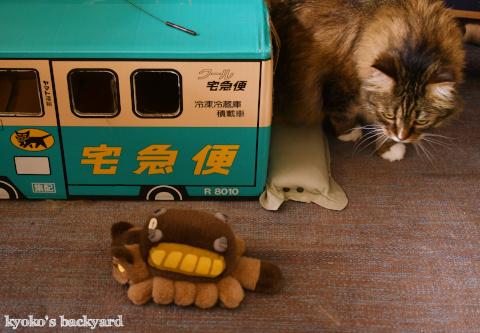 ネコバスに感化される猫?_b0253205_03512676.jpg