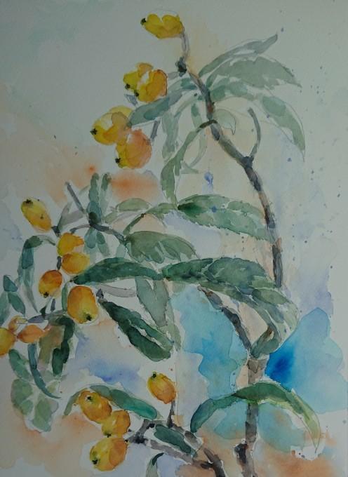 枇杷の水彩画_f0035506_19342445.jpg