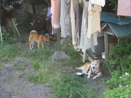 忍びの犬_b0203907_11222857.jpg