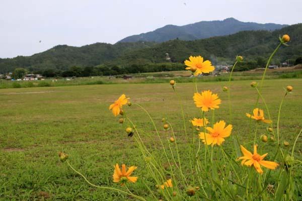広沢の池(遍照池)嵯峨野_e0048413_21012168.jpg