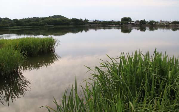 広沢の池(遍照池)嵯峨野_e0048413_21014121.jpg