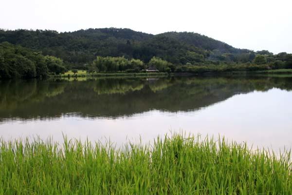 広沢の池(遍照池)嵯峨野_e0048413_21014559.jpg