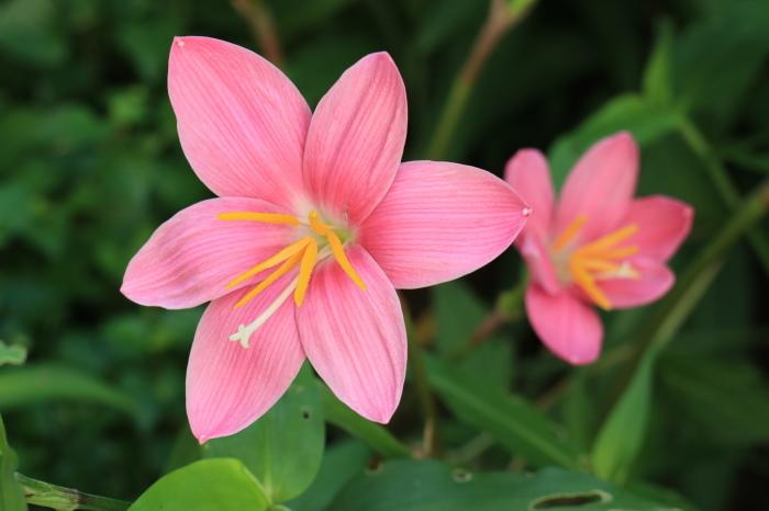 庭 の 花_d0150720_06520436.jpg
