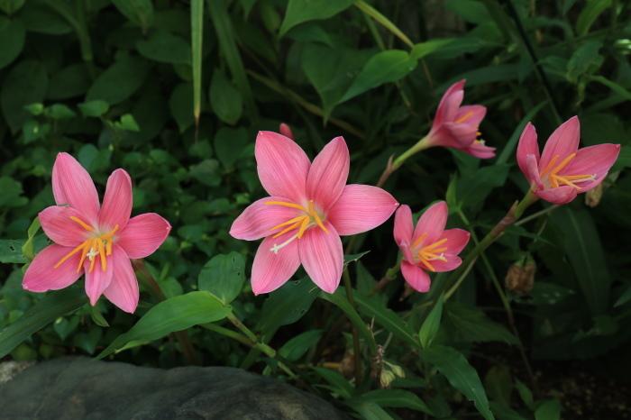 庭 の 花_d0150720_06521978.jpg