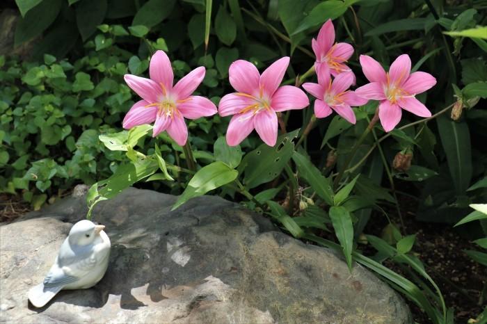庭 の 花_d0150720_06530603.jpg