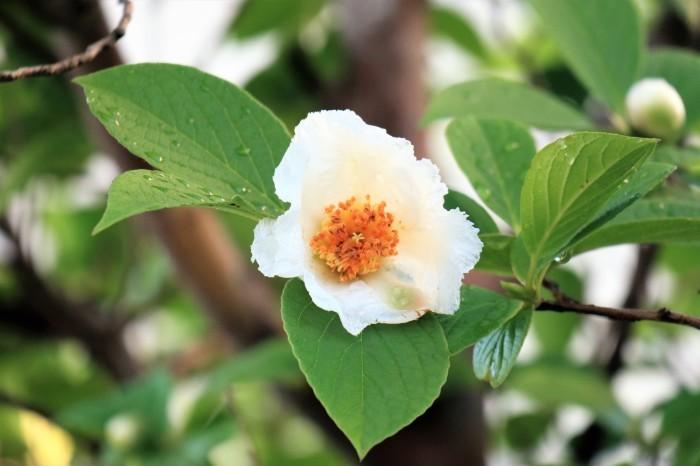 庭 の 花_d0150720_06532301.jpg