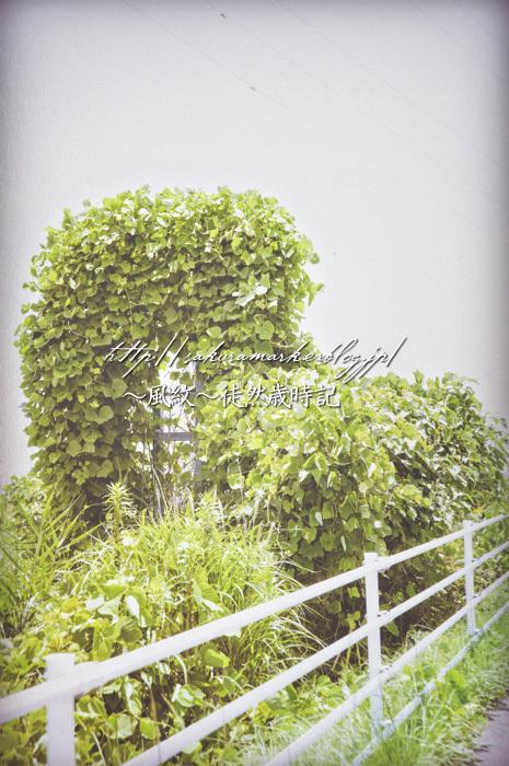 緑のオブジェ。_f0235723_20212784.jpg