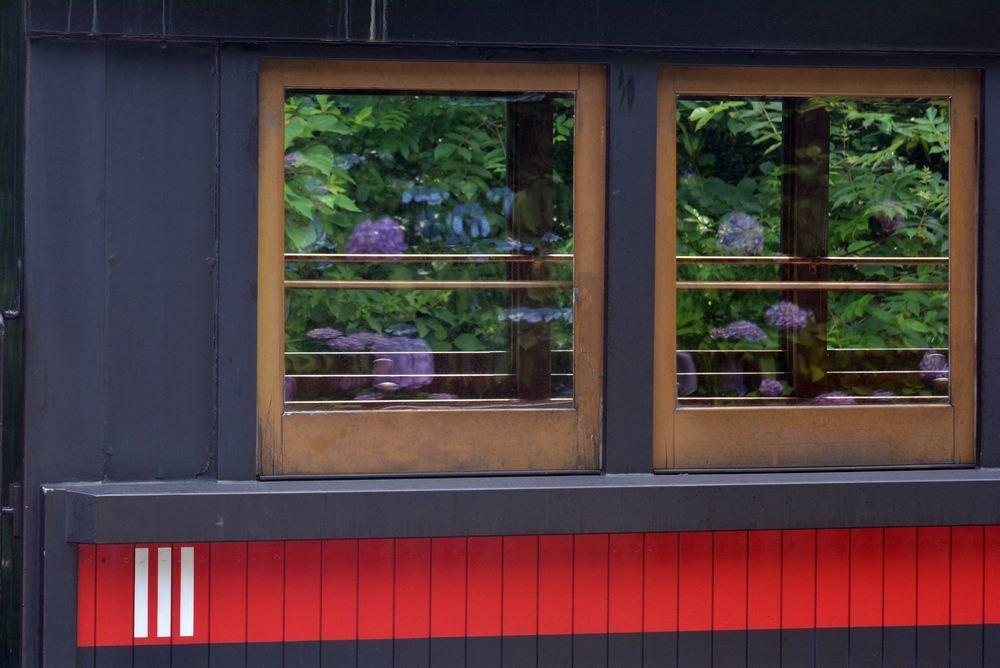 SL客車と紫陽花_e0373930_20284315.jpg