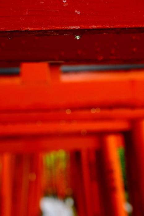 雨上がり 根津神社 FUJIFILM X-T4_f0050534_16452774.jpg