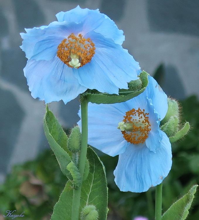 植物_a0353839_17090847.jpg