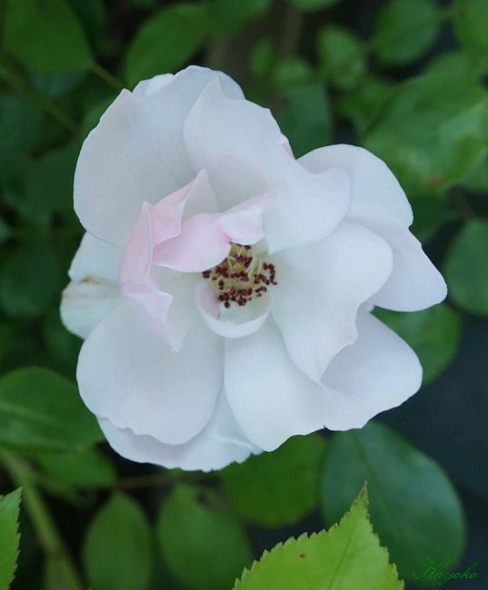 植物_a0353839_17093367.jpg