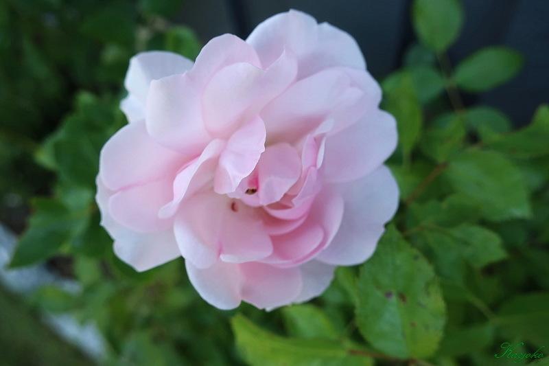 植物_a0353839_17094981.jpg