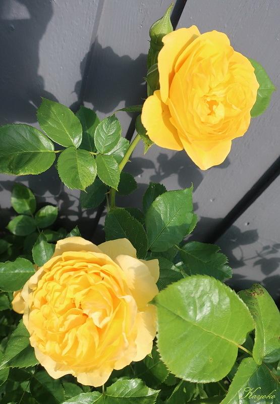 植物_a0353839_17111304.jpg