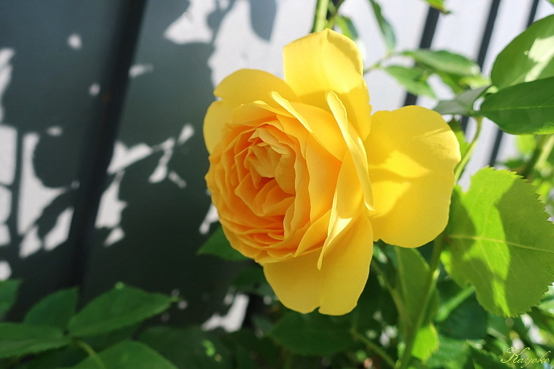 植物_a0353839_17112611.jpg