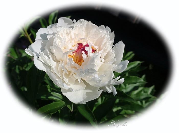 植物_a0353839_17121482.jpg