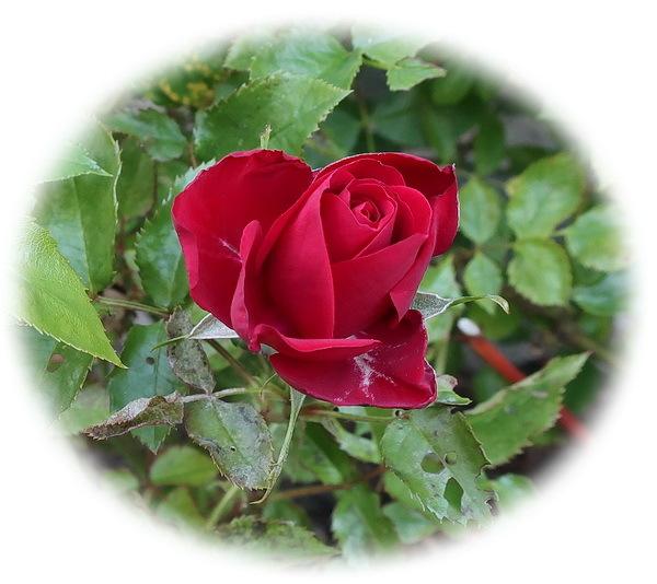 植物_a0353839_18092543.jpg
