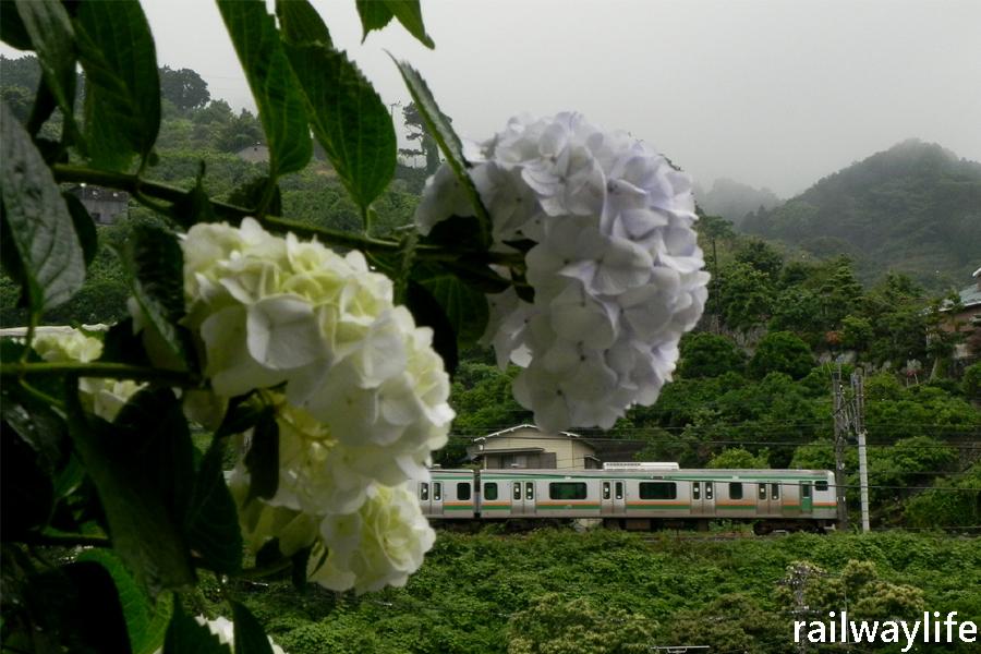 紫陽花の旅を想う_f0113552_22393749.jpg