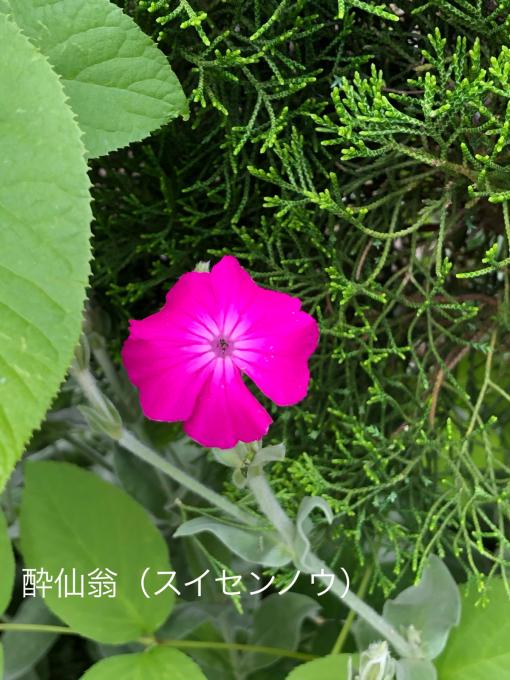 今日のお庭_b0093660_11153254.jpg