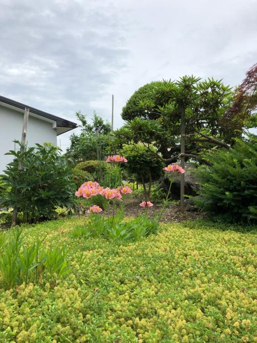 今日のお庭_b0093660_11155962.jpg